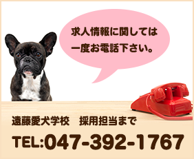 求人情報に関しては一度お電話下さい。 遠藤愛犬学校 採用担当まで TEL:047-392-1767